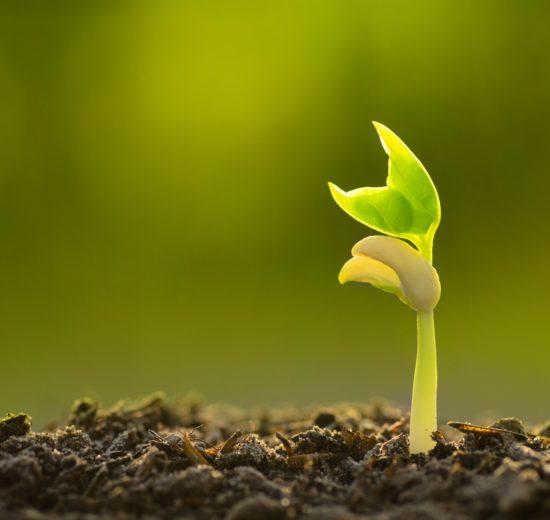 FERTI.bio_organic_fertilizer4