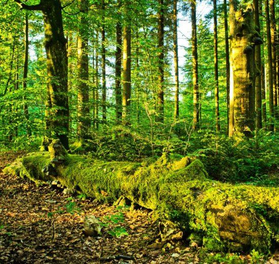 Investir-tout-en-favorisant-le-reboisement-grâce-au-groupement-forestier.jpg